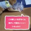 『New ねずみくん』にジャブを繰り出すココちゃん♪(271日目)