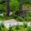 京都・荒神口 - 廬山寺 源氏の庭を彩る桔梗の花