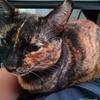 猫ブログ】猫を膝の上に載せる。