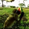 サバンナで動物鑑賞『Virry VR (欧州版)』