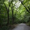 独り遊山「奥物部の森」 道のこと