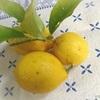 満月の日にレモン酵母作り。そして今日の持ち株。