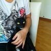 【猫ブログ】自宅で皮下点滴5日目。猫食欲ないので強制ご飯。