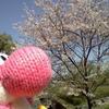 桜おさんぽ