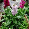 何を植えましょうか…春の花