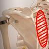 肩甲骨の可動域を広げる