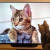 テレビに映った自分に興味津々なあんころもち