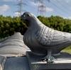 鳩の飾り瓦がかわいい件。