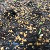 芽が出て膨らんで花が咲いたら収穫だ!