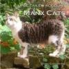 マン島の尾なし猫は泳ぎも達者なミラーズキャットなのか