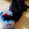今日の黒猫モモ&白黒猫ナナの動画ー796