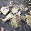 化石発掘(^o^)