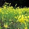 春の花 9