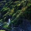 江ノ電 極楽寺の緑