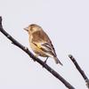 🐦野鳥の回【39】野鳥撮影を始めて半年。カメラに収めた39種類
