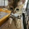 病気を持つ保護猫との暮らしから、住まいを考える