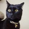 今日の黒猫モモ&白黒猫ナナのー792