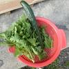 菜園だより'20 ⑧ キュウリの収穫と草刈り