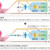 日本人のルーツ・縄文の謎に迫る二人の研究者と研究成果 考古学が進化する時代