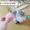 猫の道具 ~むくと遊びたい~