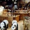 東京の博物館・美術館・動物園など
