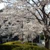 桜開花 Part 3