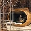 新しい猫ベッドの使い方