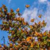 暖冬の庭から、モナーク蝶便り。年末の独り言含む。
