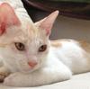 8月8日。世界猫の日、止まれの日。