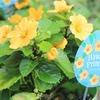 ハワイの夏らしい植物♪イリマ ハワイアンプリンセス