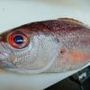 今週は高級魚が勢ぞろい!