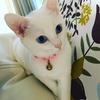 【白猫って体が弱いの?】白猫には不思議がいっぱい
