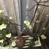 4月2日(金)十日も早く満開になったと言う三春の滝桜、今日は三春で一日過ごす予定