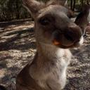 カンガルー、跳ねる! - オーストラリア留学記