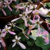11月8日誕生日の花と花言葉