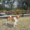 お花見散歩のつづき