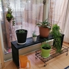 観葉植物棚をDIY!タラタラやったら1カ月もかかりましたけど。