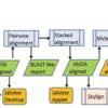 Uniprotデータベースに対する高速なタンパク質ホモロジーサーチを行う SANSparallel