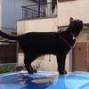 黒猫とクルマ