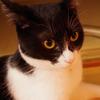 今日の黒猫モモ&白黒猫ナナの動画ー780