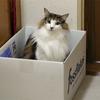 O次郎 警備猫立ち寄り処