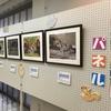大朝公民館で動物写真展開催中