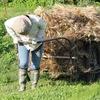 麦の連作障害とバインダーの裏ワザ?