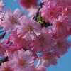 一応2018年これが最後の桜写真アップロード