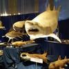 『海のハンター展』でホホジロザメを見てきました…カッコいい…