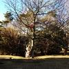 静岡旅行2日目(2) 富士山2合目の遊園地『ぐりんぱ』へ