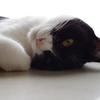 今日の黒猫モモ&白黒猫ナナの動画ー789