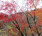マルガヤ尾根で小丸・大丸・塔ノ岳登山!丹沢バリエーションルート縦走(前編)