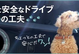犬と安全なドライブ4つの工夫