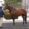 2022年新種牡馬:デクラレーションオブウォー